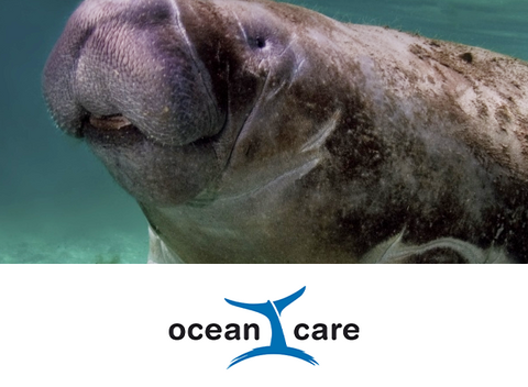 [Translate to IT:] OceanCare